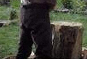 Beorn chopping Wood