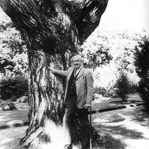Tolkien Pine