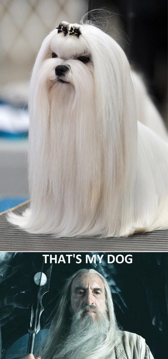 chien-saruman